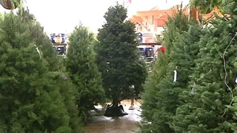 how much jingle will fresh christmas tree cost