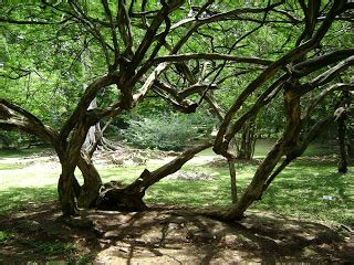 Kbr Bogor kamel kebun raya bogor kbr