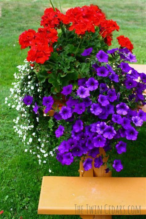 summer flowering shrubs sun 25 best ideas about sun garden on