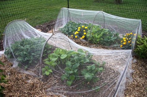 Garden Row Covers by Using Garden Row Covers For The Cold Season