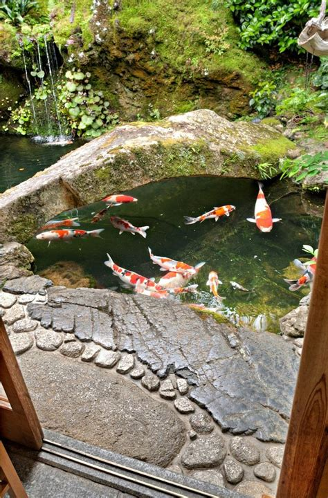 how to make a koi pond in your backyard 1000 ideas about fish ponds on pinterest ponds koi ponds and garden ponds