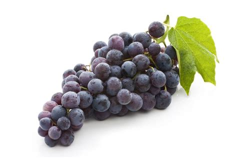 imagenes de uvas sin fondo uva morada gastronom 237 a vasca escuela de hosteler 237 a leioa