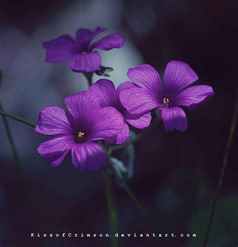 flowers images purple flowers hd wallpaper and background photos 21148781