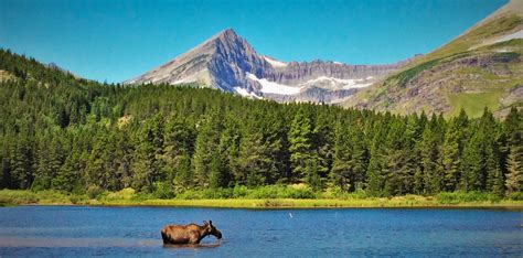 Family Homes Plans by Glacier National Park Many Glacier