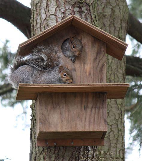 squirrel house squirrels in their squirrel house backyard squirrels com