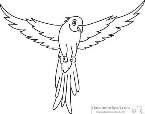 Bird Wings Outline by Macaw Wings Open Images