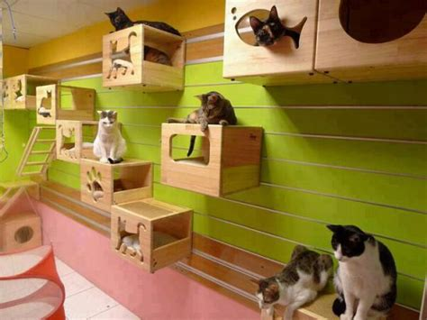 Cat Room Ideas by Creative Decor For Cats Home Design Garden