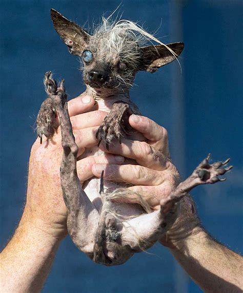 world s ugliest quasi modo the mutt is crowned world s ugliest nbc news
