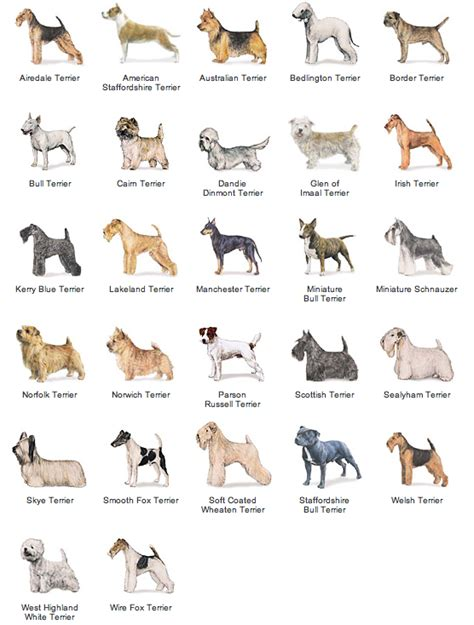 types of purebred dogs akc breed list breeds