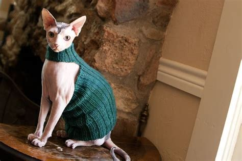 knitting pattern cat clothes queen bean sphynx sweater knitting pattern hairless
