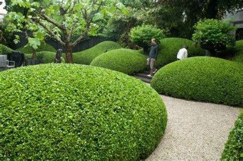 japanischer garten amsterdam sumptuously curvy hedging in amsterdam 2 gardens