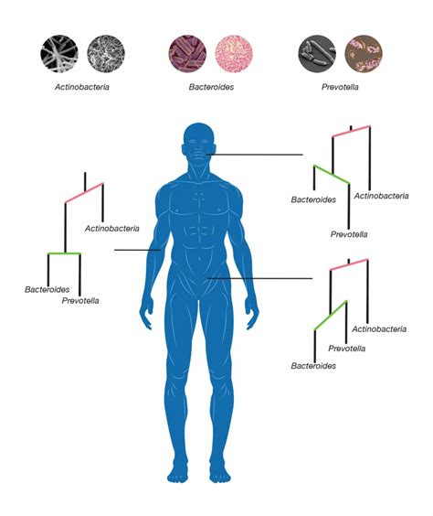 public area in body parts microbes evolved to colonize different parts of the human