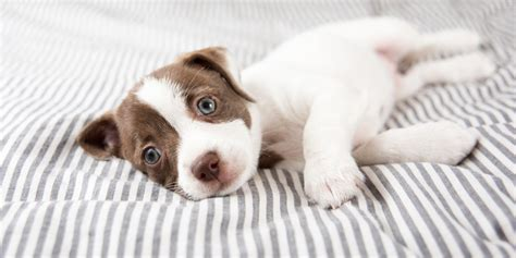 websites to sell puppies this clothing company may actually be selling dogs as supplementaries clicker