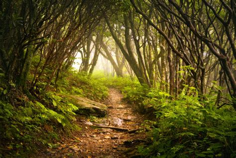 craggy gardens hike
