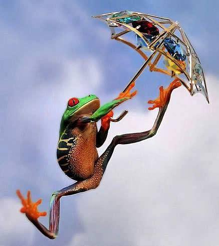 globallshare     world funny frogs frog animals
