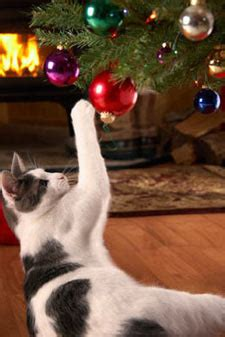 best to keep cats off the xmas tree how to keep your cat the tree