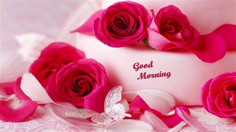 beautiful images beautiful roses pics royalty free digital stock photos