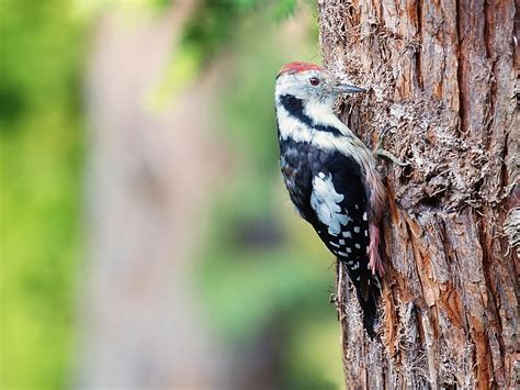 15 unknown facts about woodpeckers