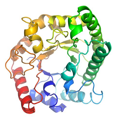 protein molecular structure protein has seven functions that distinguish from other