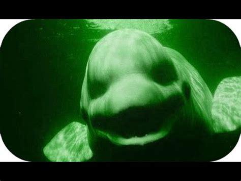 imagenes raras del oceano las 3 cosas m 225 s extra 241 as encontradas en el fondo del mar