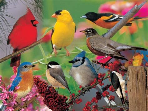 backyard birder impact photographics puzzle backyard birds