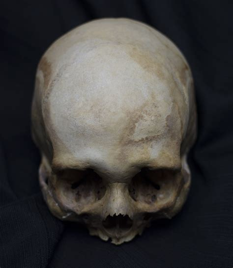 5 Weird Facts About The Human Skull And 5 High Res Images Skull On