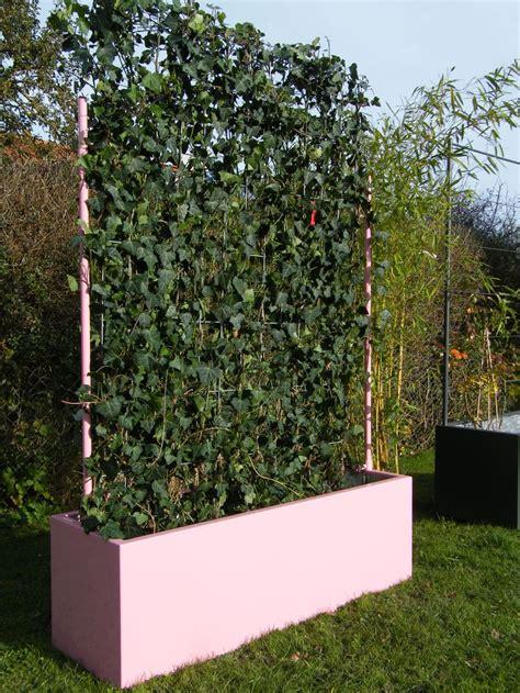 Garten Hecke by 25 Best Ideas About Fertighecke On Windschutz