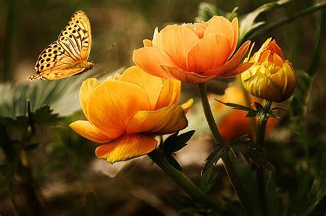 beautiful orange flowers background butterflies beautiful orange