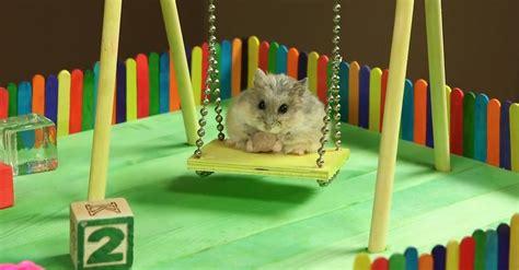 hamster swing tiny hamster tiny playground 2 jpg