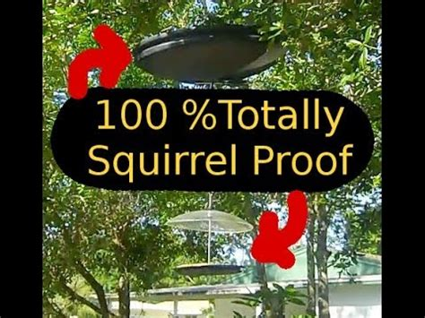 stopping squirrels from eating at the bird feeder how to