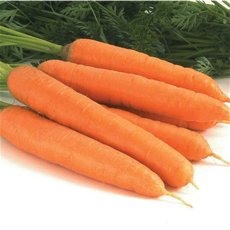 coding for carrots negovia organic f1 carrot seed johnny s selected seeds