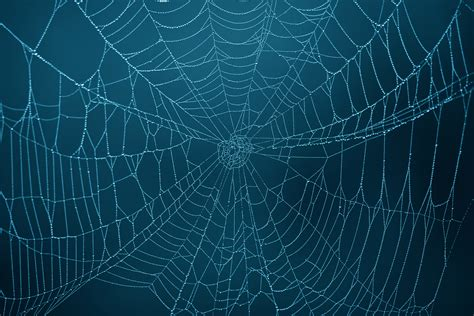 spider web background spider web backgrounds wallpapersafari