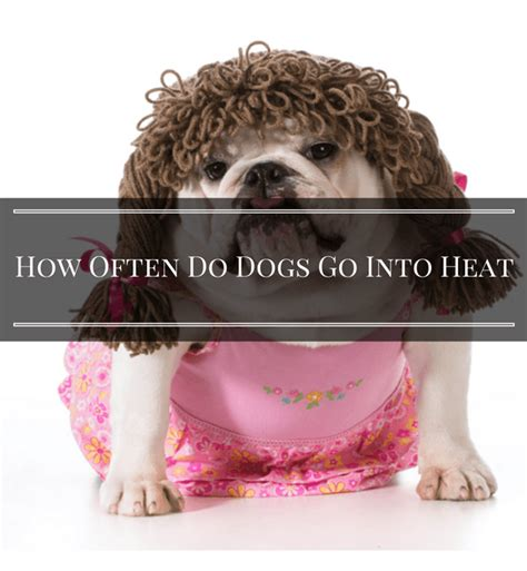 how often does a go in heat how often do dogs go into heat 7 ways to tell 2017