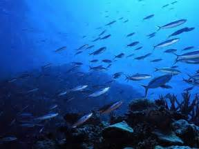 pictures of fishes in ocean