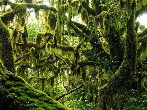 imagenes de paisajes gallegos los bosques h 250 medos m 225 s espectaculares del mundo