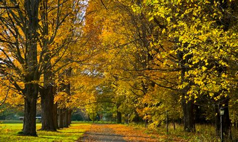Tours From Boston To Cape Cod - autumn in the berkshires bike tours fall foliage massachusetts travel