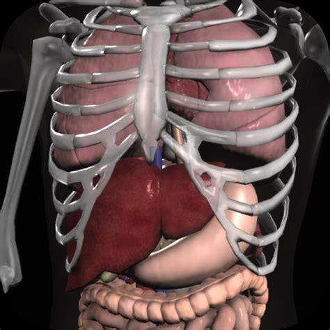 organ anatomy anatomy 3d organs anatomija organov