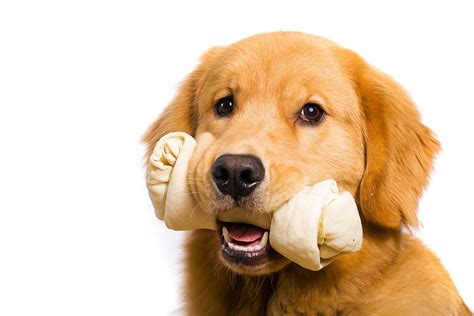 food for golden retriever feeding a golden retriever for optimum health the golden