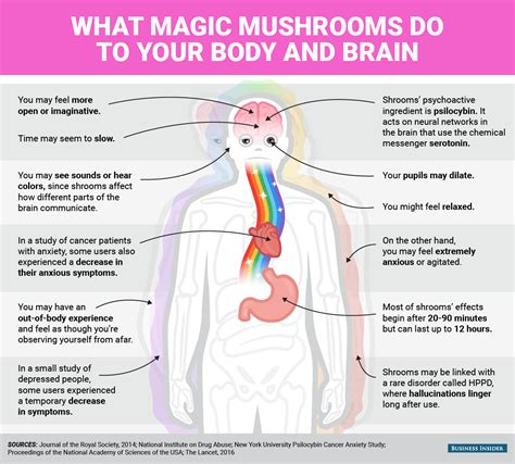 Magic And Mind mental and physical effects of magic mushrooms business