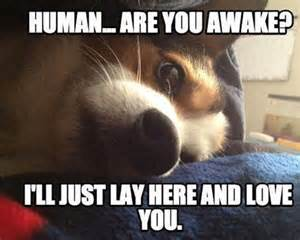 Meme Loving Fuck - cute animal i love you meme www imgkid com the image