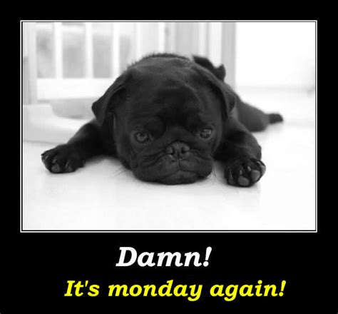 Its Again by Damn Its Monday Again Pictures Photos And Images For