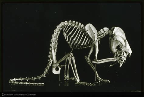 opossum anatomy diagram search results for labeled image of skeleton calendar 2015