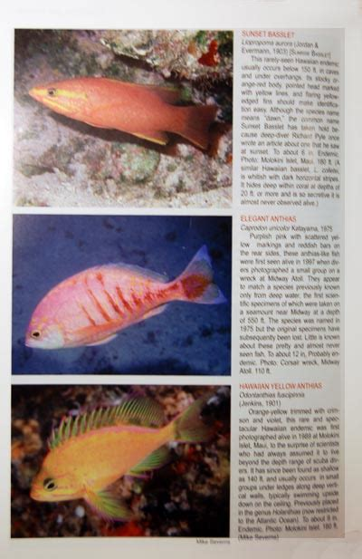 the ultimate guide to hawaiian reef fishes sea turtles ultimate guide to hawaiian reef fishes goes above and