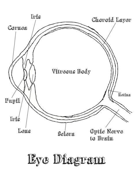 diagram of eye for free and printable eye diagram diagram site