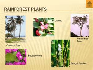 Plants In A Tropical Rainforest Biome - world biomes animals and plants