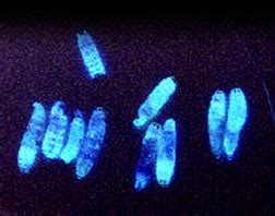 blue light bacteria killer ghoulish glow microbes inside worms kill pests
