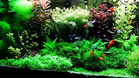 dutch style aquarium  tf planter fertiliser youtube