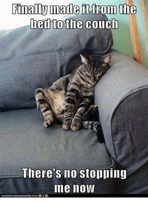 the bed you made for me finally made it from the bed to the couch there s no stopping ime now grumpy cat