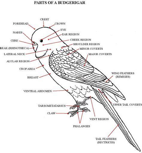 25  Best Ideas about Parakeet Cage on Pinterest   Diy