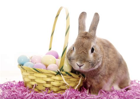 easter bunny easter bunny wish you happy easter top quality wallpapers